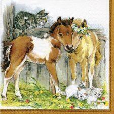 Kitten & Foals in stable