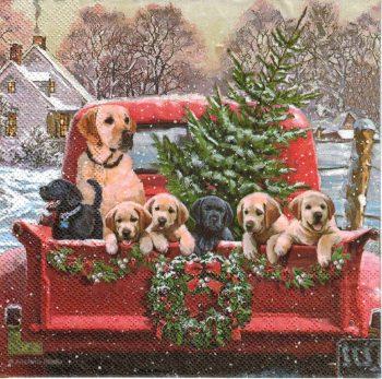 dog ready for Christmas