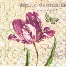 Belle Tulip