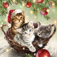 Christmas cats in basket