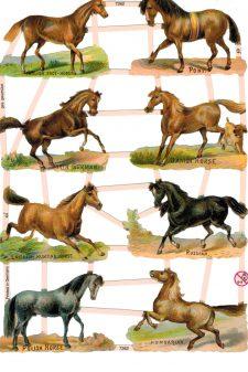 world horses