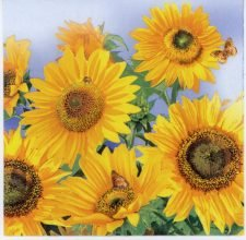 Paper Napkins Wild Sunflowers
