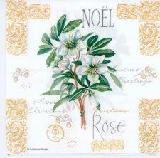 christmas white roses