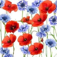 red poppy blue cornflower