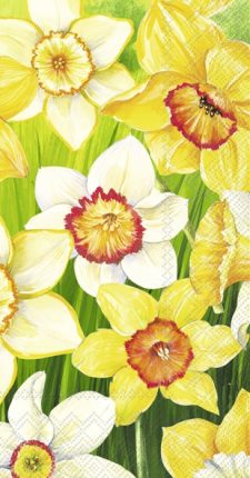 Daffodils field