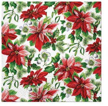 Glory Poinsettia