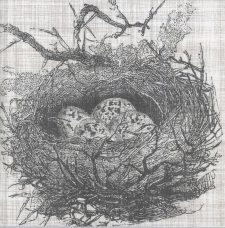 Decoupage Paper Napkins | Bird Nest with Eggs | Autumn Napkins | Lunch Napkins | Party Napkins | Paper Napkins for Decoupage
