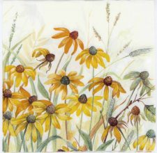 Event Paper Napkins Wild Chrysanthemums