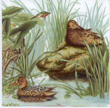 Decoupage Paper Napkins of Wild Ducks at Lake | Paper Napkins for Decoupage