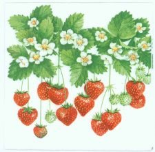 Summer Strawberries|Garden Napkins | Paper Napkins for Decoupage